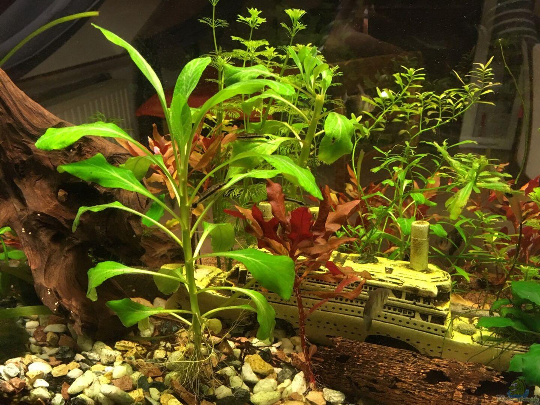 pflanzen im aquarium becken 33922 kunterbunter beginn aus becken 33922 kunterbunter beginn von. Black Bedroom Furniture Sets. Home Design Ideas