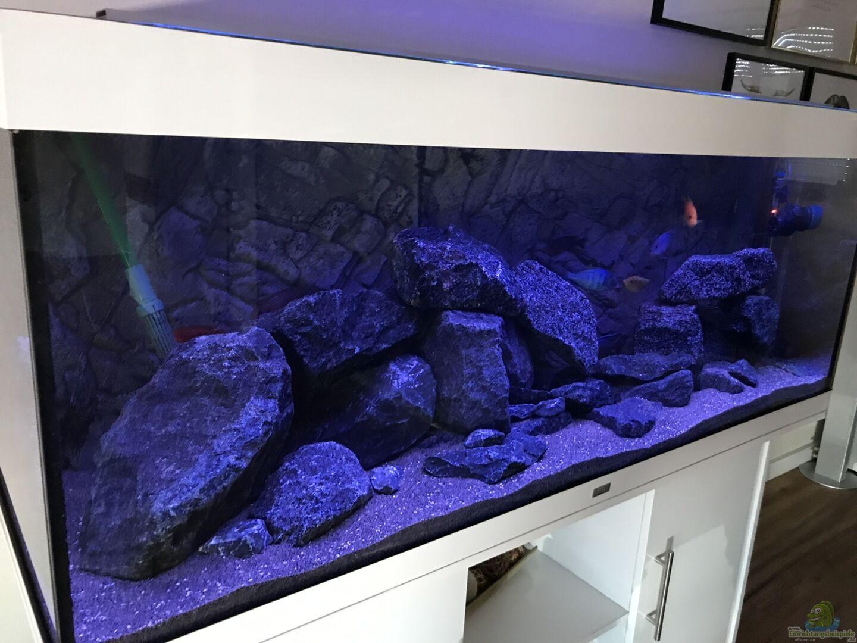 aquarium von cj 33990 malawi. Black Bedroom Furniture Sets. Home Design Ideas