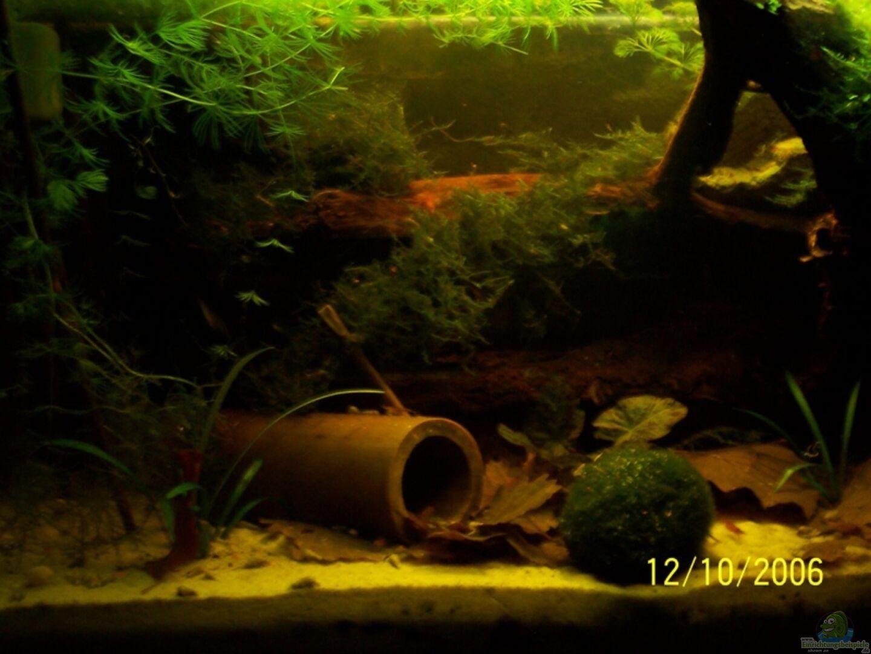 aquarium von alexander schild becken 3402. Black Bedroom Furniture Sets. Home Design Ideas