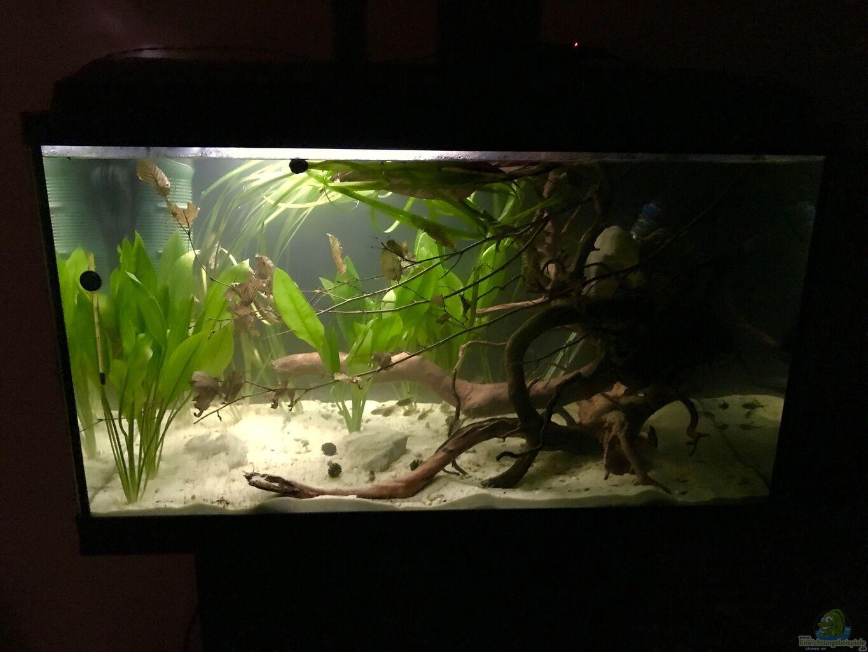 aquarium vergr erung von kleines gr n aus vergr erung von kleines gr n von raven887. Black Bedroom Furniture Sets. Home Design Ideas