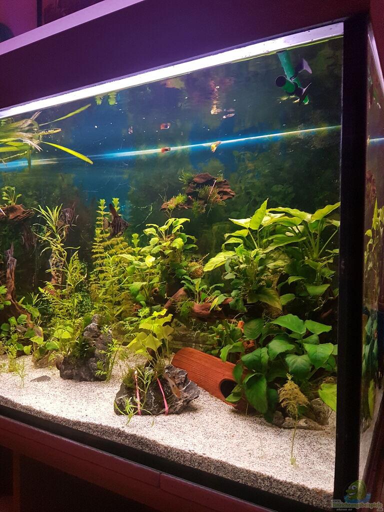 aquarium 450 liter aus 450 liter von aquarius1988. Black Bedroom Furniture Sets. Home Design Ideas