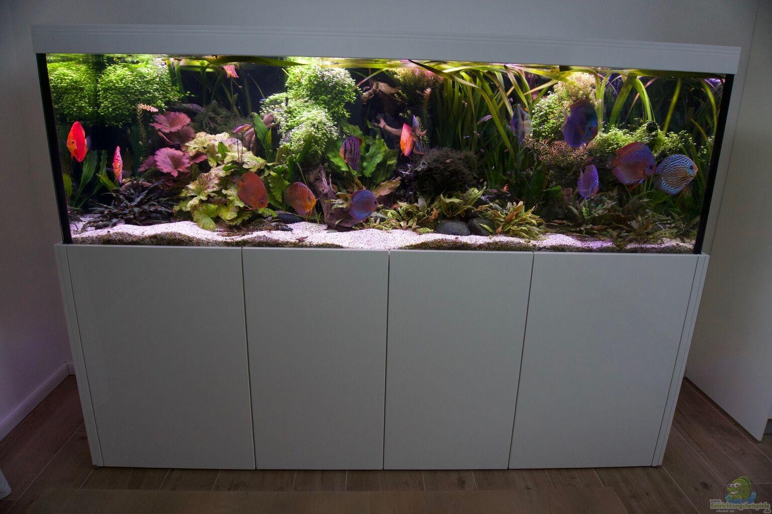Aquarium bunte diskus und vielf ltige bepflanzung aus for Diskus aquarium