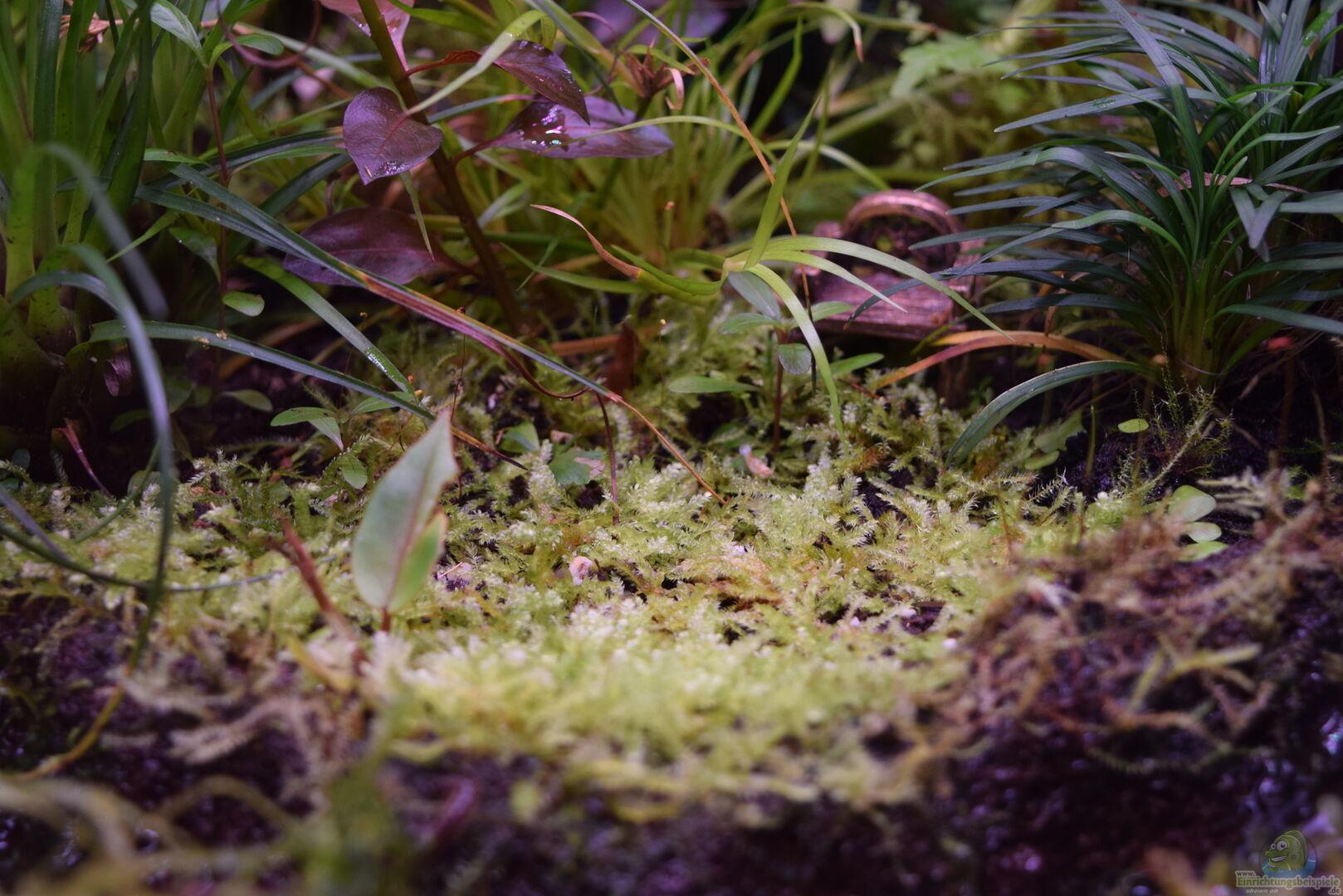 pflanzen im aquarium a river runs through it aus a river runs through it von junglist. Black Bedroom Furniture Sets. Home Design Ideas