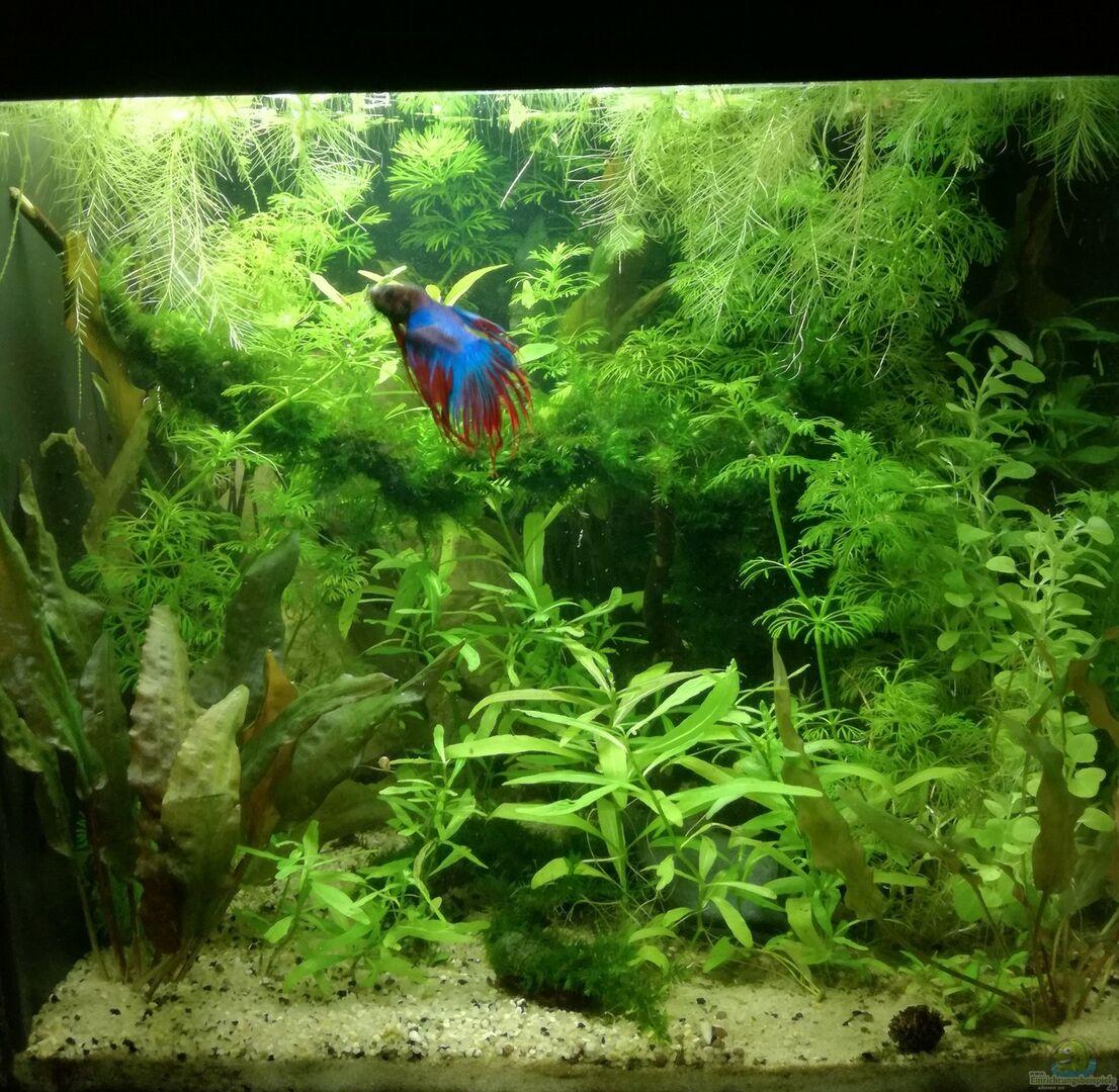 aquarium von heike fuchs becken 34165