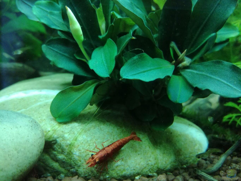 pflanzen im aquarium becken 34170 aus becken 34170 von heike fuchs. Black Bedroom Furniture Sets. Home Design Ideas