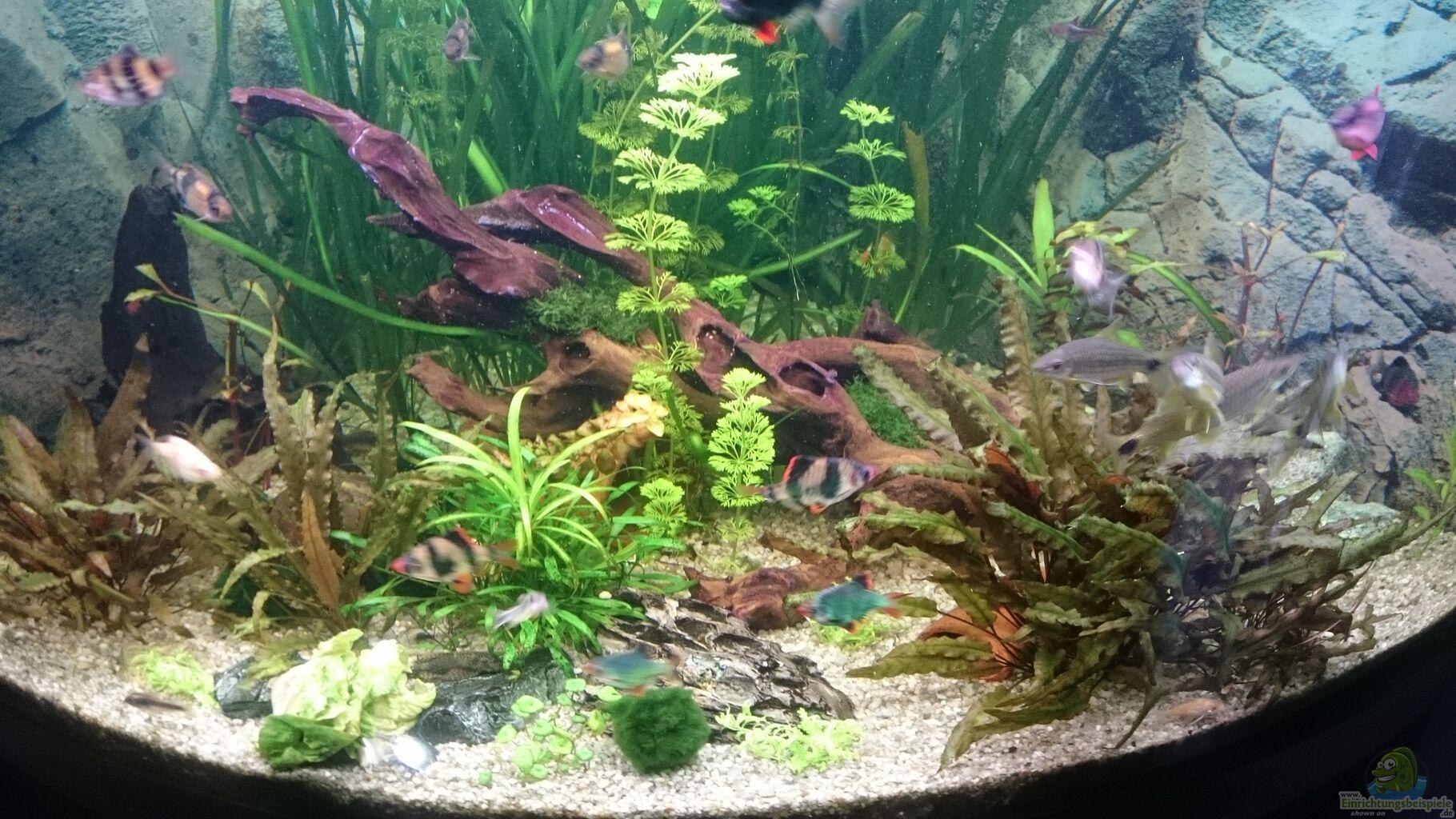 aquarium juwel trigon 350 wohnzimmer aus juwel trigon 350 wohnzimmer von chris de bird. Black Bedroom Furniture Sets. Home Design Ideas