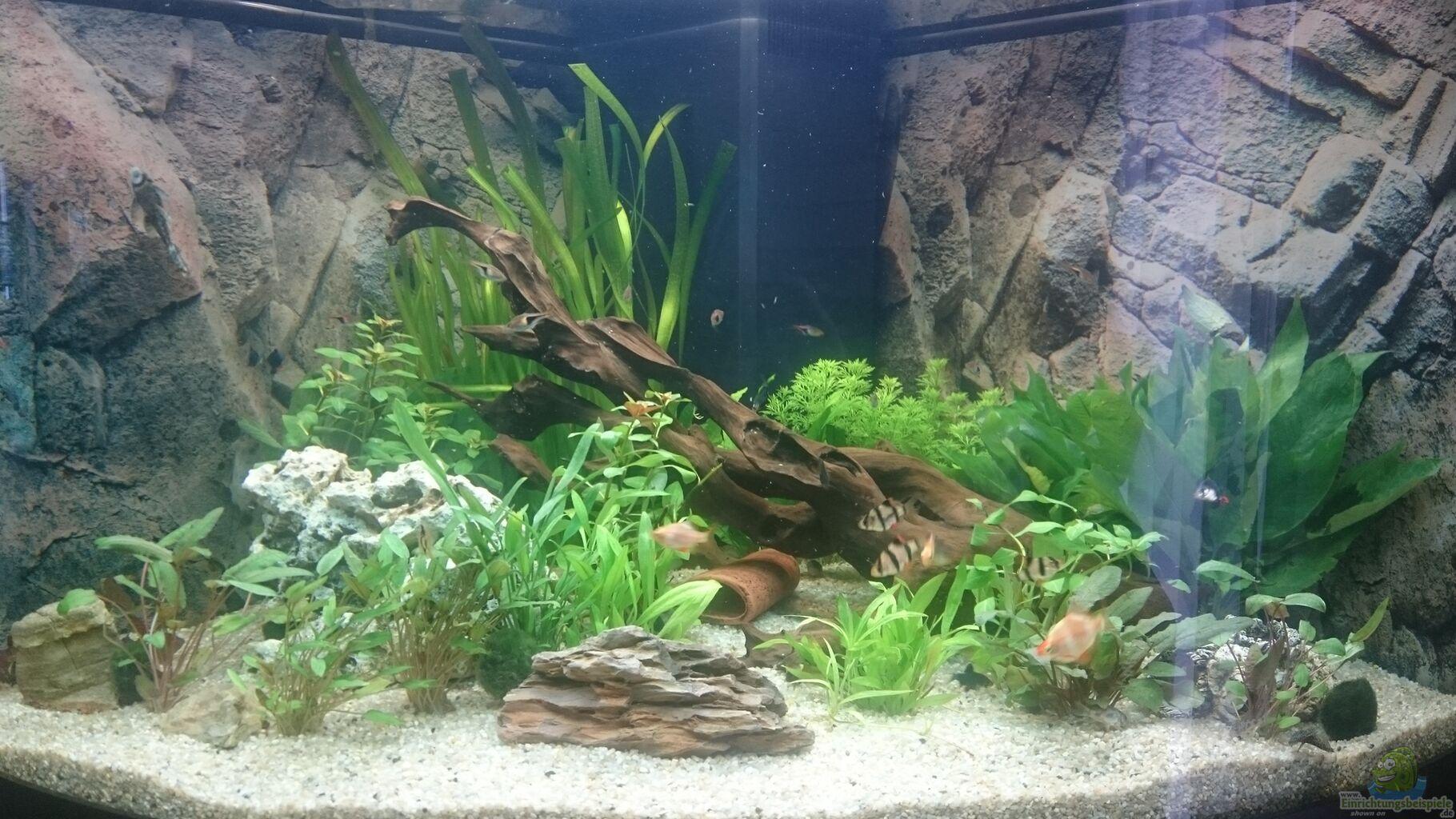 pflanzen im aquarium juwel trigon 350 wohnzimmer aus juwel trigon 350 wohnzimmer von chris de bird. Black Bedroom Furniture Sets. Home Design Ideas