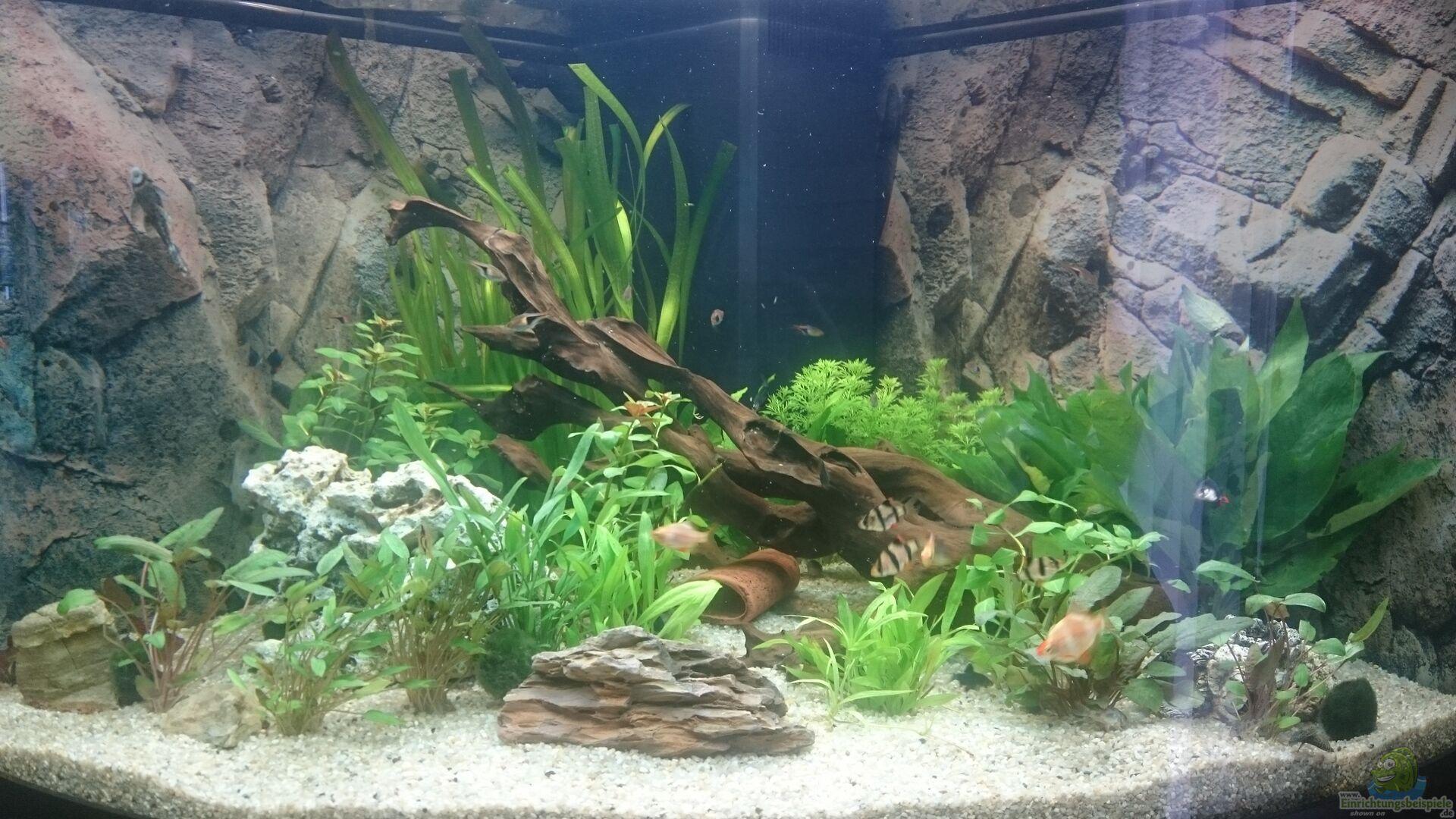 Pflanzen im aquarium juwel trigon 350 wohnzimmer aus juwel for Pflanzen im wohnzimmer