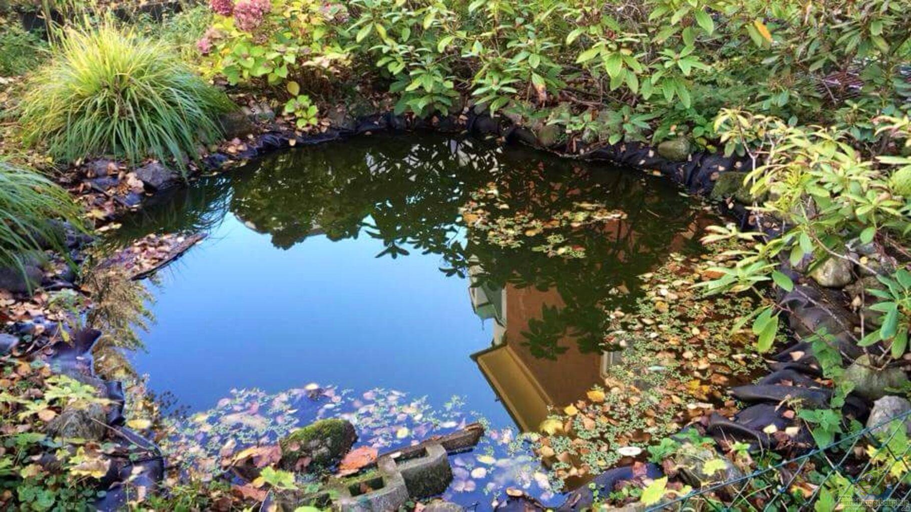 Der teich im herbst aus biotop schildkr ten wg teich for Zierfische im teich