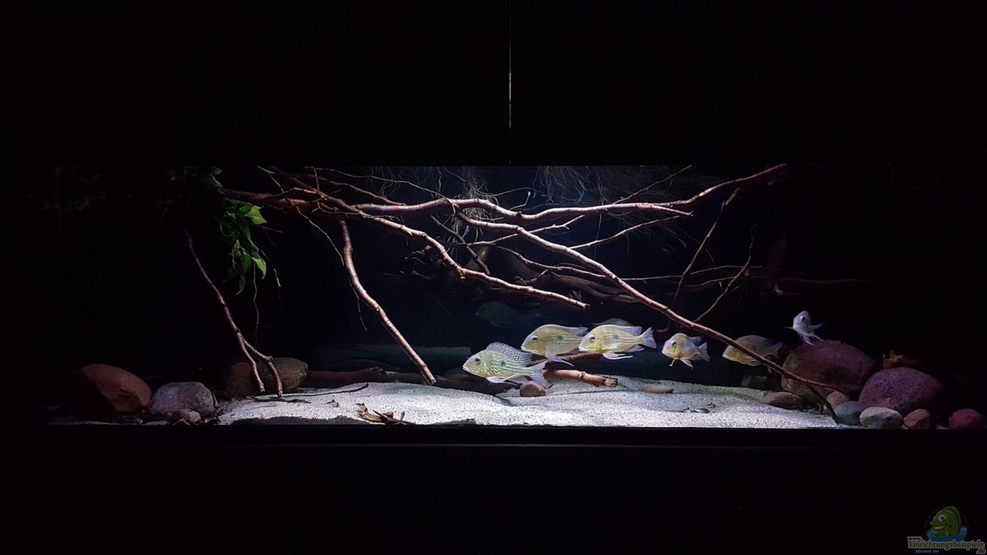 s damerika aquanaut 34235 amazonas klarwasser biotop. Black Bedroom Furniture Sets. Home Design Ideas