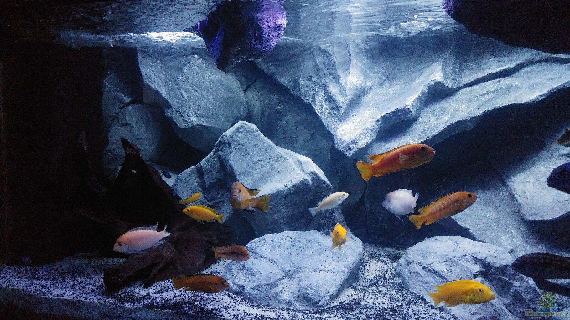 aquarium von mirko zeisse malawibecken. Black Bedroom Furniture Sets. Home Design Ideas
