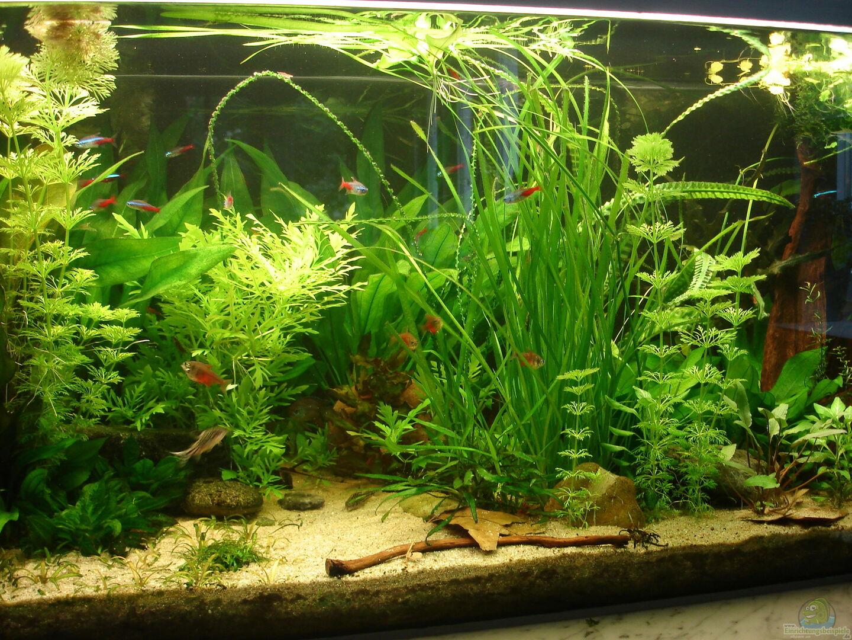 pflanzen im aquarium becken 34244 ehemaliges diskusbecken aus becken 34244 ehemaliges. Black Bedroom Furniture Sets. Home Design Ideas