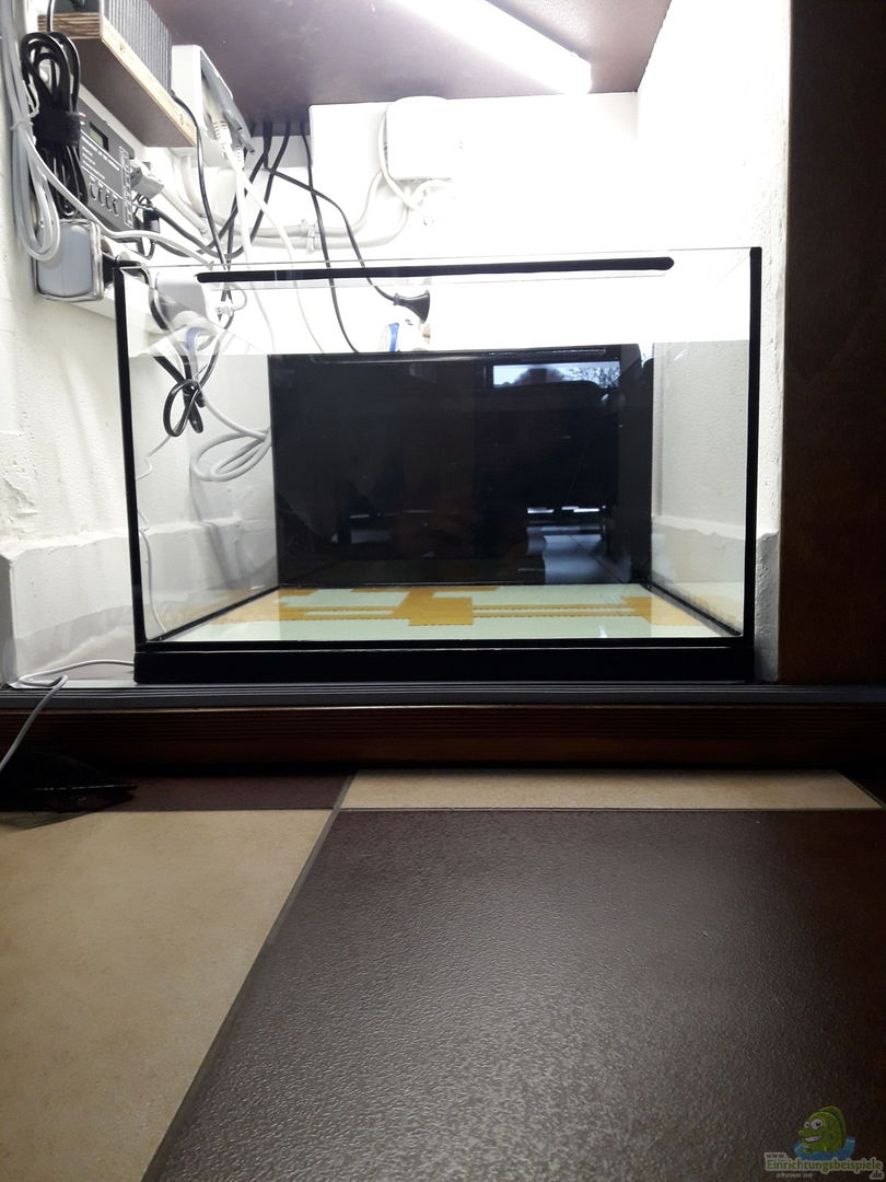 fichte 34275 kinderstube corydoras panda nurnoch als beispiel. Black Bedroom Furniture Sets. Home Design Ideas