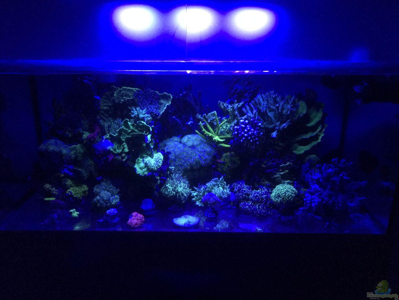 michael schmidt 34401 meerwasser korallenriff. Black Bedroom Furniture Sets. Home Design Ideas