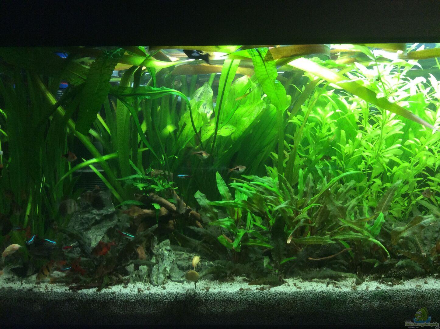 pflanzen im aquarium gr nes paradies aus gr nes paradies von gg. Black Bedroom Furniture Sets. Home Design Ideas