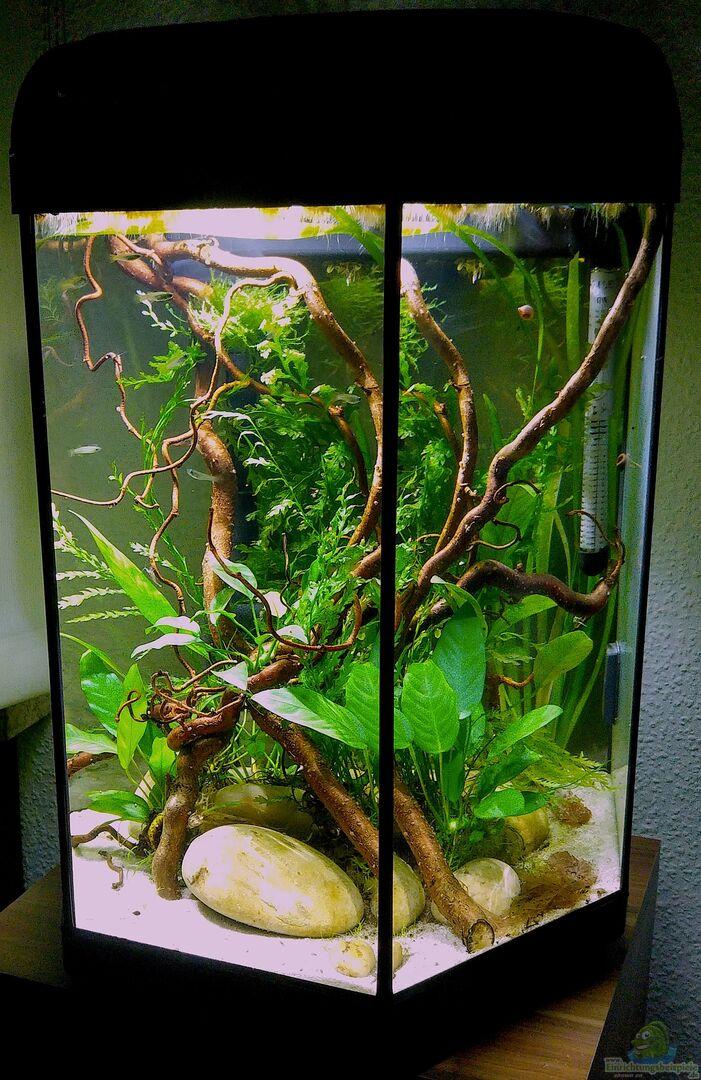 pflanzen im aquarium 6 eck westafrikabecken aus 6 eck westafrikabecken von kuller. Black Bedroom Furniture Sets. Home Design Ideas