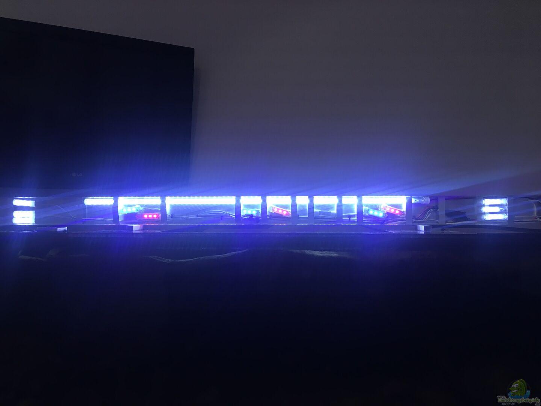 beleuchtung aus s damerikabiotop von thomas s h. Black Bedroom Furniture Sets. Home Design Ideas