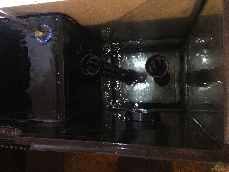rohre f r filterpatronen aus s damerikabiotop von thomas s h. Black Bedroom Furniture Sets. Home Design Ideas