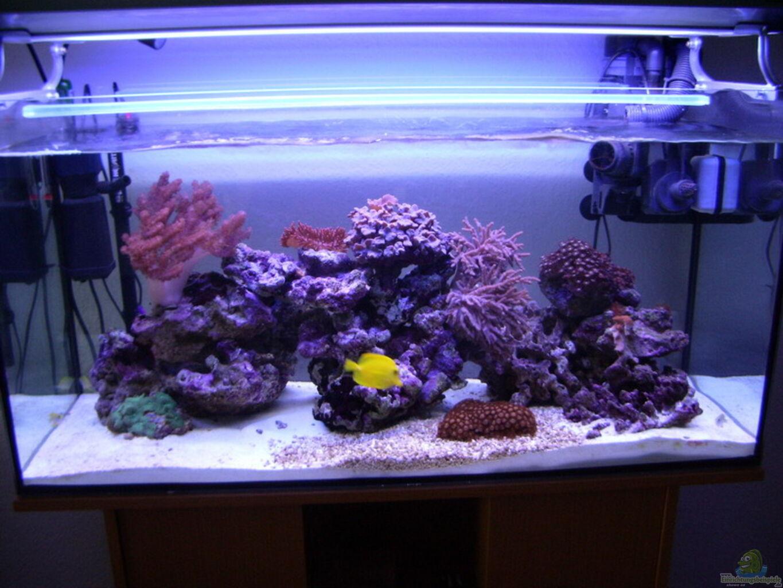 aquarium von michael k ster becken 3494. Black Bedroom Furniture Sets. Home Design Ideas