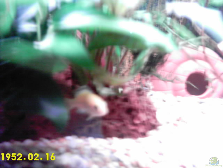 fisch aquarium spiele