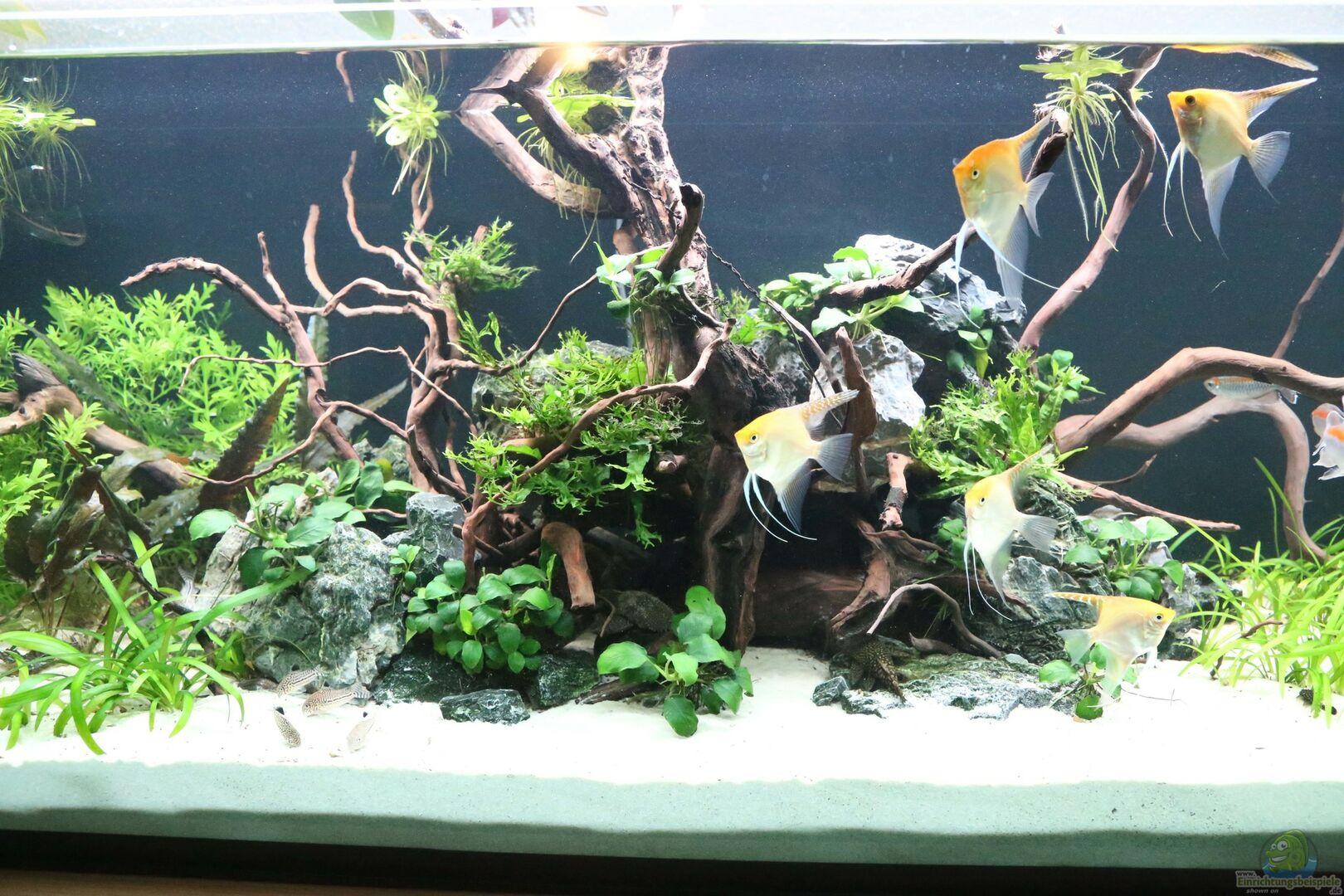 pflanzen im aquarium steinwurzel aus steinwurzel von michinet. Black Bedroom Furniture Sets. Home Design Ideas