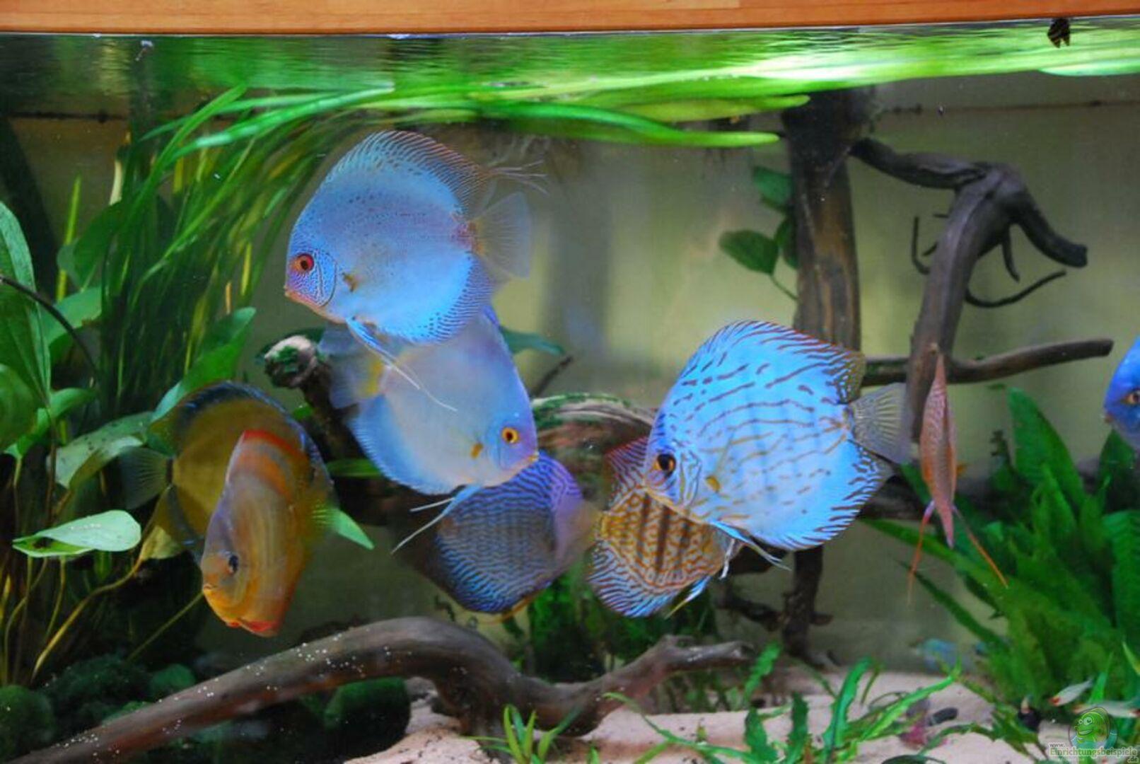 Aquarium von Discusfan: Becken 3605