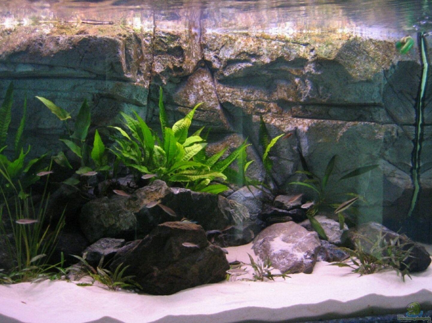 aquarium von artur schumacher becken 3627. Black Bedroom Furniture Sets. Home Design Ideas