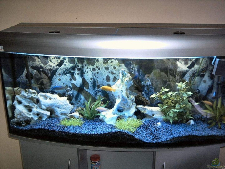 Aquarium von uwe krieg becken 3631 for Aquarium 120x40x50