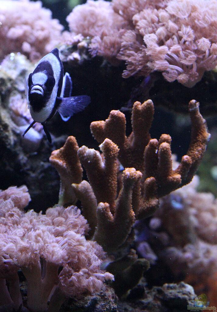 aquarium von kerstin a laber riff xxl. Black Bedroom Furniture Sets. Home Design Ideas