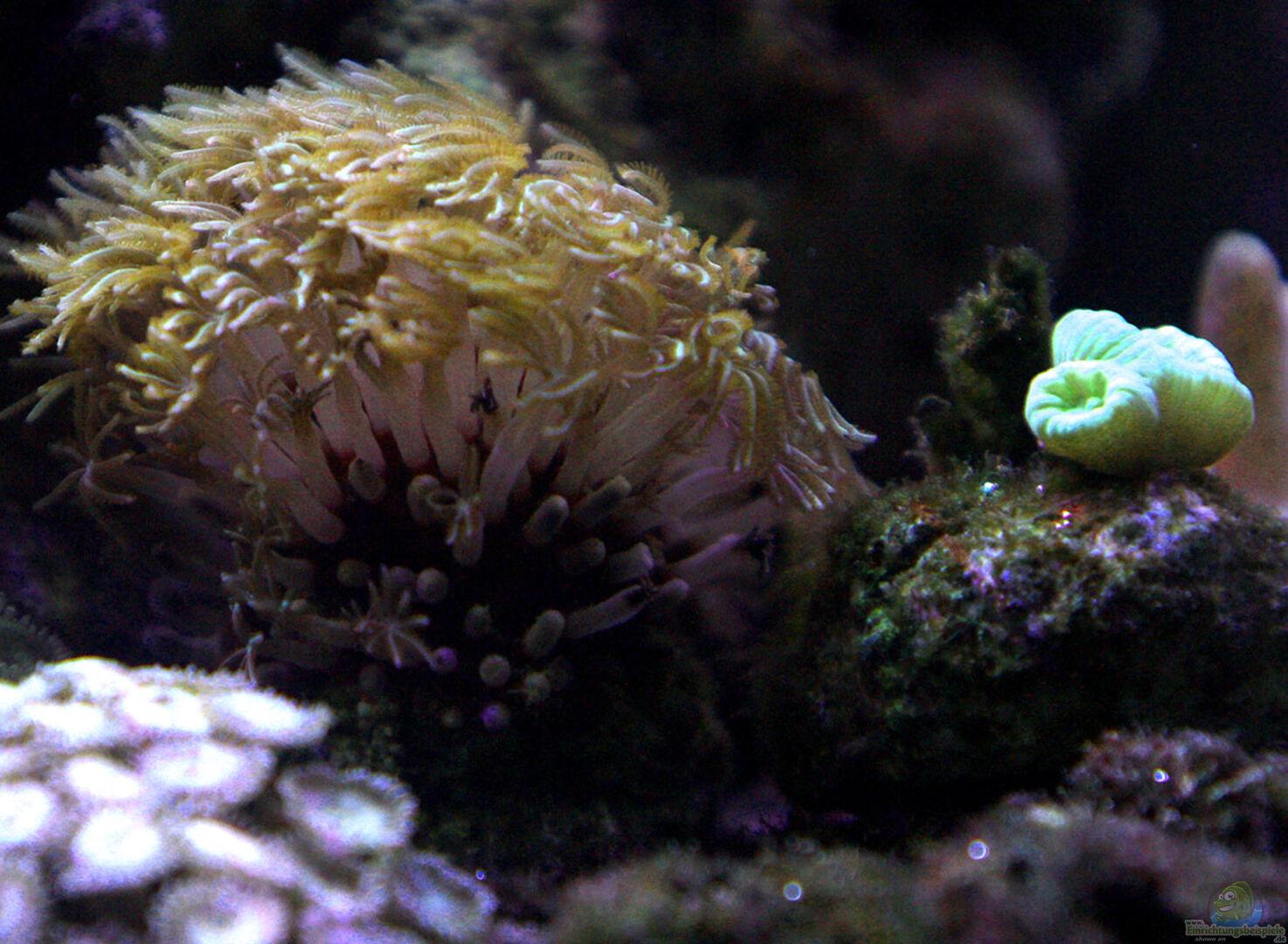 Dekotation Im Aquarium Riff Xxl Aus Riff Xxl Von Kerstin Asslaber