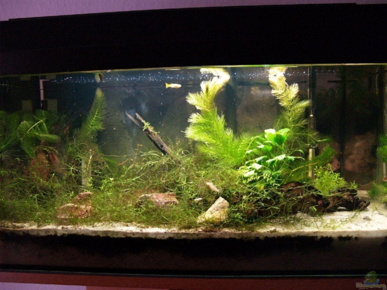aquarium von rasrol 3647 60l aufgel st. Black Bedroom Furniture Sets. Home Design Ideas