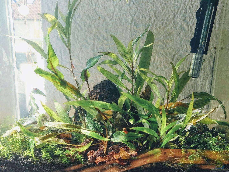 pflanzen im aquarium t mpel aus t mpel von smogan. Black Bedroom Furniture Sets. Home Design Ideas