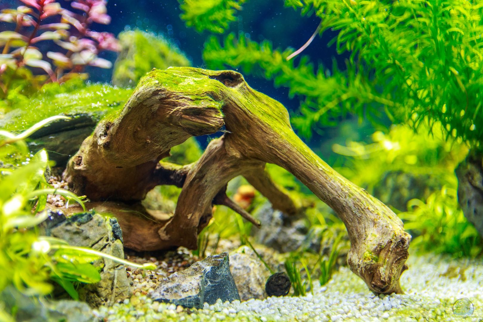 aquarium von tommyr 36788 tommys 39 scape. Black Bedroom Furniture Sets. Home Design Ideas