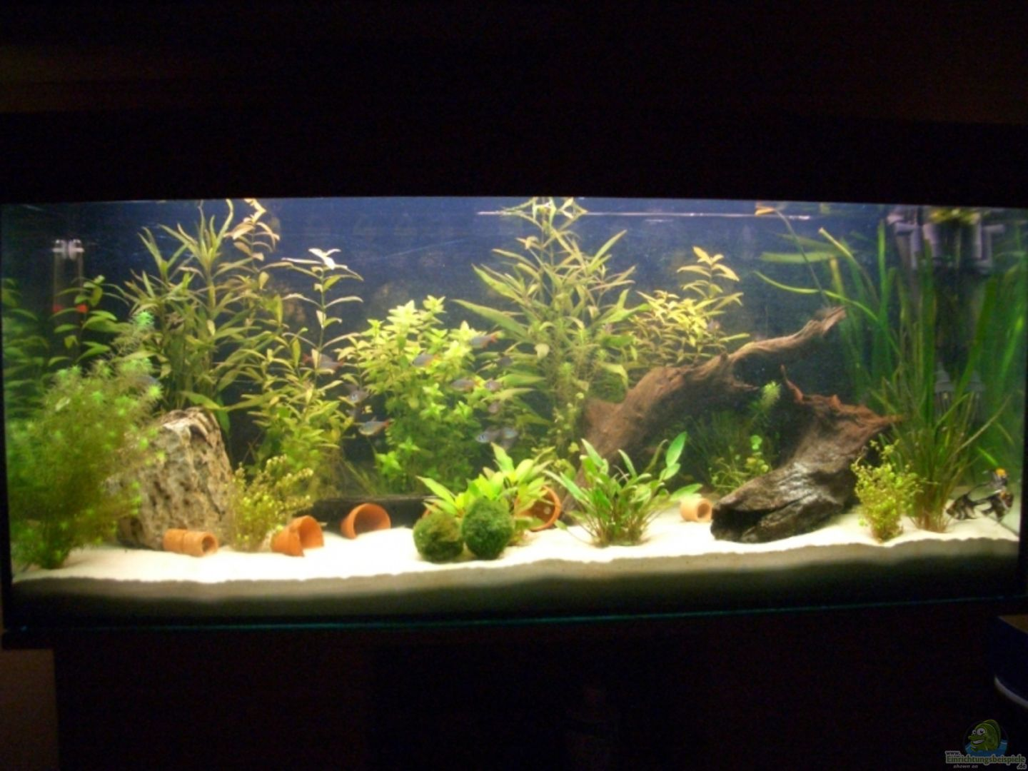 Aquarium von juergen keimeleder becken 3711 for Aquarium 120x40x50