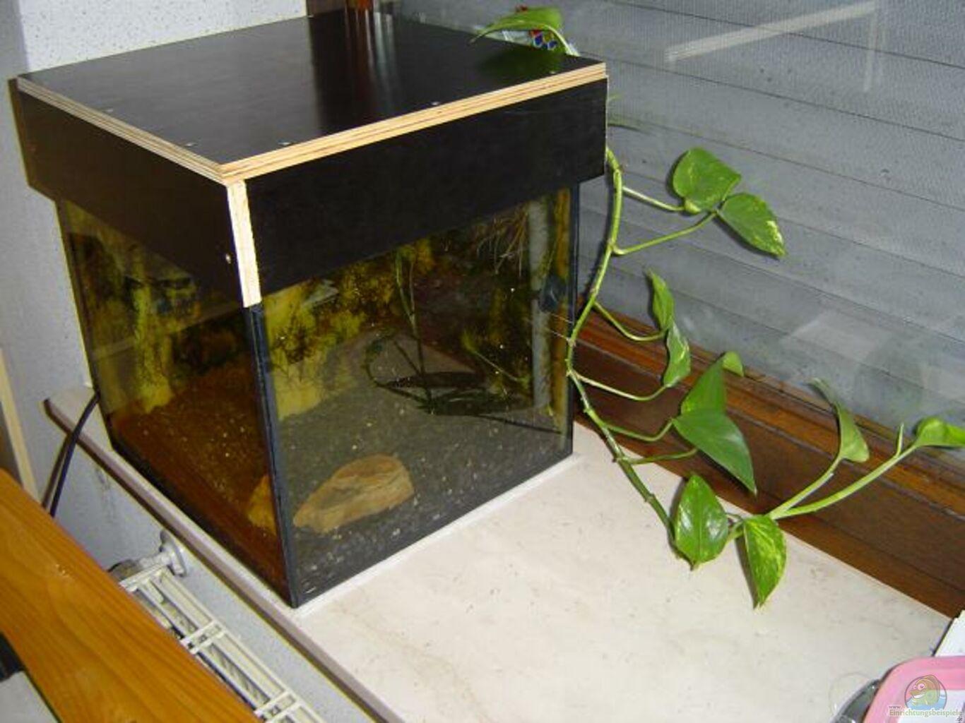 aquarium von maik husham becken 3724. Black Bedroom Furniture Sets. Home Design Ideas