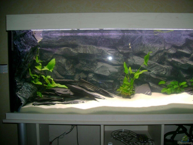 aquarium von oliver jaguczak becken 3764. Black Bedroom Furniture Sets. Home Design Ideas