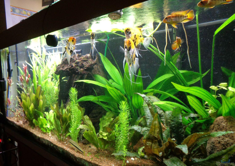 aquarium von fisch57 becken 38085. Black Bedroom Furniture Sets. Home Design Ideas