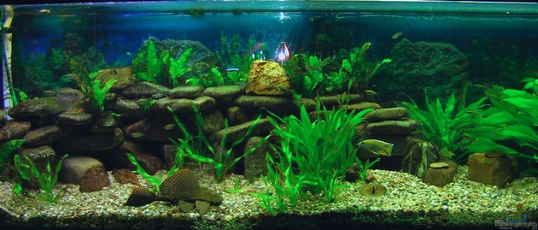 aquarium von jeaw70 becken 4018. Black Bedroom Furniture Sets. Home Design Ideas