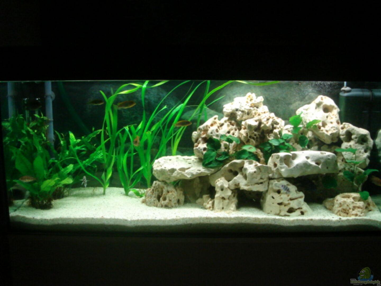 Aquarium von stefan schweinhardt becken 4046 for Aquarium 120x40x50