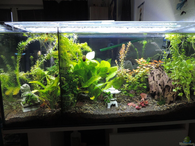 Aquarium Von Oreoemmy 40664 Kampffisch Paradies