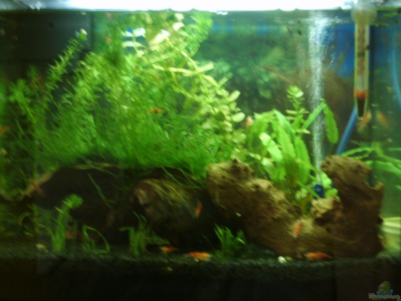 aquarium von matthias s ldner becken 4078. Black Bedroom Furniture Sets. Home Design Ideas