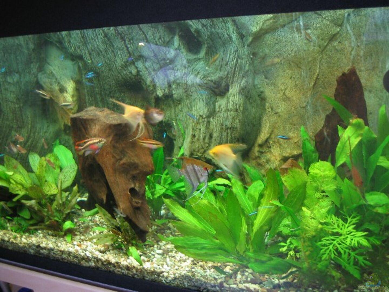 aquarium von friedrich stra l becken 4158. Black Bedroom Furniture Sets. Home Design Ideas