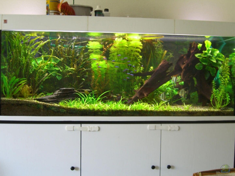 aquarium von christian epp becken 4269. Black Bedroom Furniture Sets. Home Design Ideas
