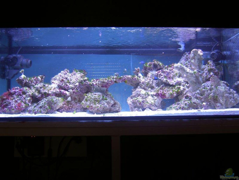 aquarium von torben alsmeyer becken 4394. Black Bedroom Furniture Sets. Home Design Ideas