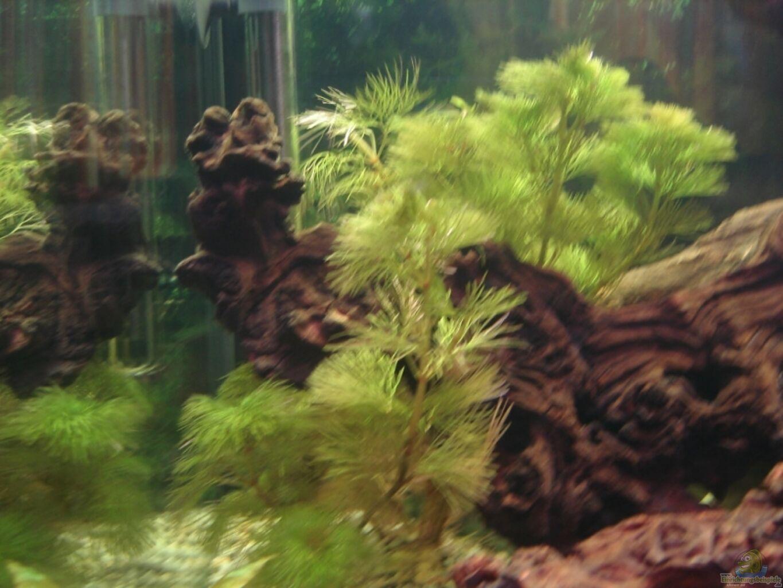 haarnixe aquarium