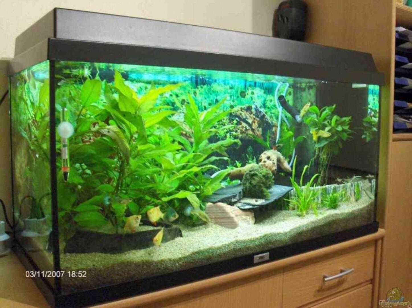 aquarium von marcus voglsinger becken 4410. Black Bedroom Furniture Sets. Home Design Ideas