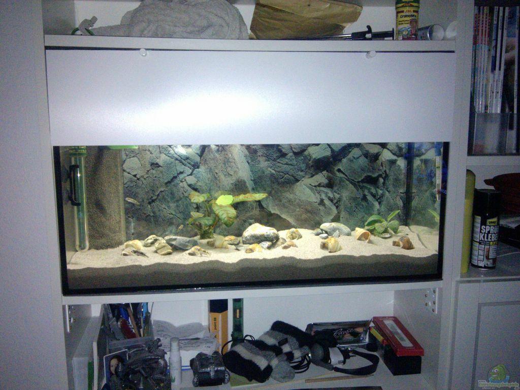 aquarium von talorin ikea billy regal aquarium. Black Bedroom Furniture Sets. Home Design Ideas