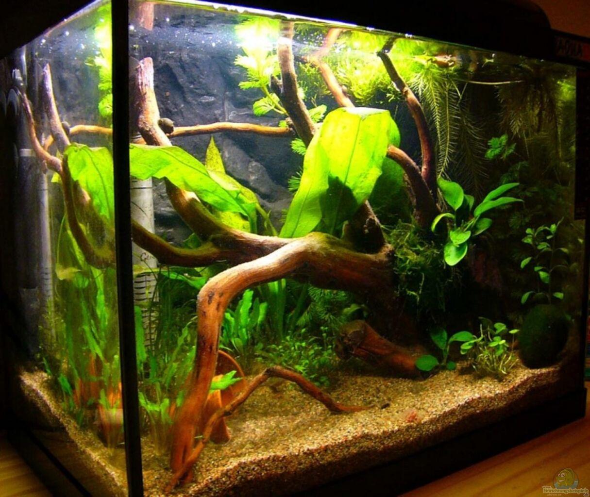 aquarium von andrea lorenz becken 4462. Black Bedroom Furniture Sets. Home Design Ideas