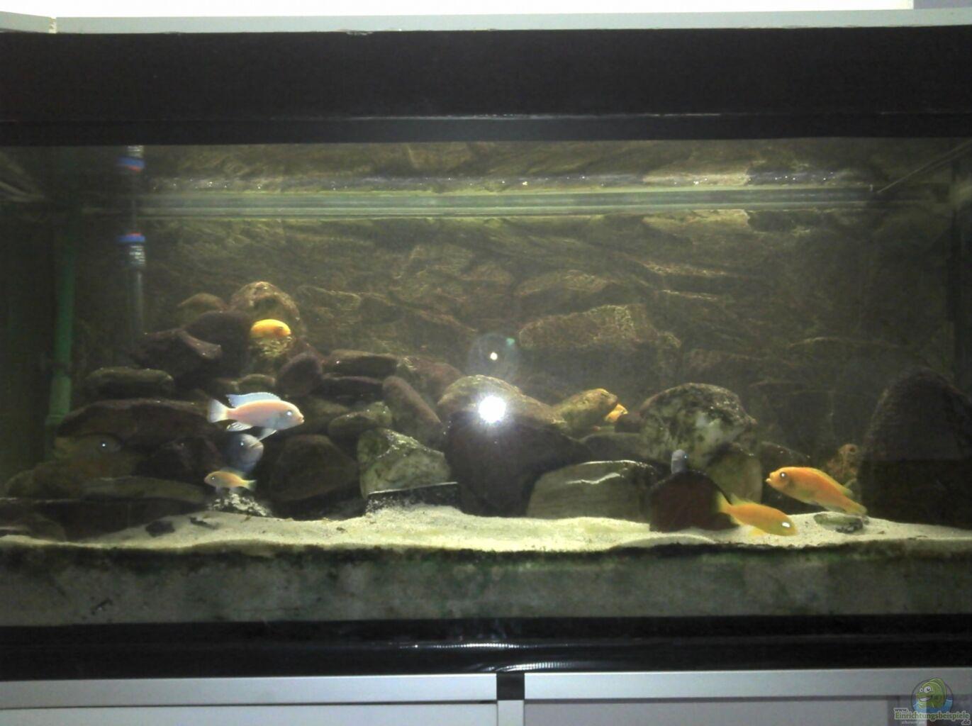 aquarium von rain malawibecken. Black Bedroom Furniture Sets. Home Design Ideas