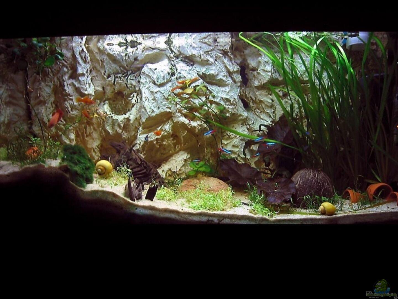 Aquarium von dennis klusmann becken 4513 for Zierfische hannover